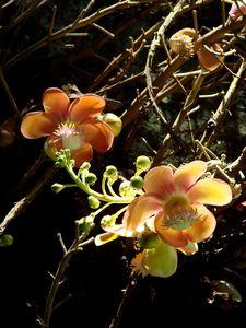 胡蝶蘭サイズの大きな花です