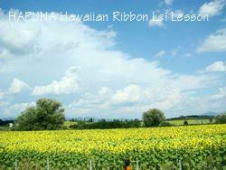 トスカーナのひまわり畑