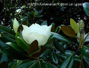 magnolia01.jpg